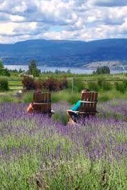 Adirondack chairs in fields of lavender Adirondack Chairs, Outdoor Chairs, Outdoor Furniture, Outdoor Decor, Mini Farm, Landscape Paintings, Fields, Vineyard, Image
