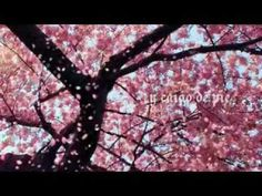 Enrique Bunbury - El tiempo de las cerezas ( letra ) - YouTube
