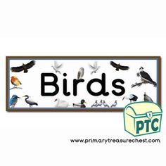 Bird Themed Resources - Primary Treasure Chest Teaching Activities, Teaching Ideas, Crafts For Kids, Arts And Crafts, Sound Art, Letter Sounds, Treasure Chest, Phonics, Initials