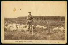 Dans les Landes. Berger filant sur ses Echasses. Landes region.  Shepard spinning yarn on his stilts.