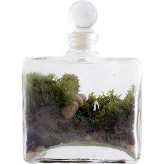 Live Moss Terrarium Kit
