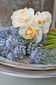 Blå små gleder som er verdt å vente på....
