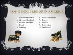 Did your dog make the list?  #dogs #TreasureJourneys