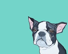 """Comic Illustration of your pet from your photographs 8x10 """"Boston Terrier"""""""