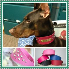 We received the collar and Elsa absolutely loves it! Thank you so much!