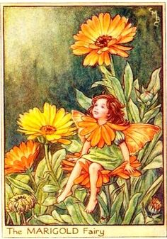 'The Marigold Fairy' by Cicely Mary Barker