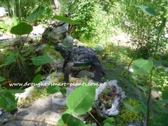 The Topiary Turtle is a fun little project; it's recycling at it's best - who…