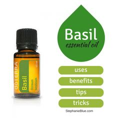 How is basil essential oil used and what's it good for? In our home, basil essential oil is the go-to when someone is struggling with ear issues. Essential Oils For Nausea, Marjoram Essential Oil, Ginger Essential Oil, Essential Oils Soap, Essential Oil Uses, Essential Oil Diffuser, Basil Oil, Coconut Oil For Acne, Essential Oil Storage