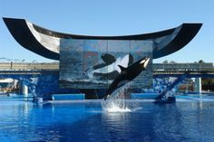 SeaWorld, infamous for keeping orcas and dolphins imprisoned in captivity, is planning an international expansion. Stop SeaWorld from dooming more animals to a life of suffering.