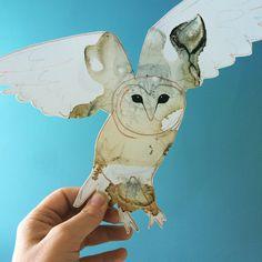 Venus, Moth, Insects, Moose Art, Illustrations, Bird, Animals, Animales, Animaux