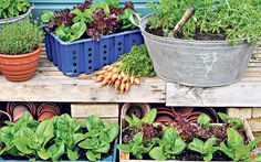 How to grow fruit and veg for salads throughout the cold winter months.
