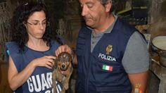 Offerte di lavoro Palermo  Denunciato il proprietario. A Gela pensionato fermato in strada dove aveva mozzato le orecchie al suo cucciolo di pitbull  #annuncio #pagato #jobs #Italia #Sicilia Ragusa: dieci cani malnutriti salvati in una masseria
