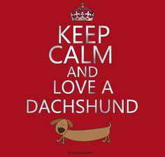 Keep calm and love a dachshund. Piebald Dachshund, Daschund, Dachshund Quotes, Dachshund Love, Crusoe The Celebrity Dachshund, Weenie Dogs, Doggies, Cute Funny Dogs, Keep Calm And Love