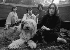 UN PASEO CON LOS BEATLES: Martha la perra pastora de Paul