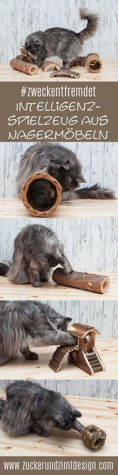 Misused: wooden intelligence toys for your cat – ideal for dry cat food from Almo Nature – sugar and cinnamon design - Katzen Animals And Pets, Funny Animals, Dry Cat Food, Made Of Wood, Cat Toys, Cute Cats, Fur Babies, Cat Lovers, Swimming