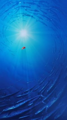 Disney iPhone Wallpapers: Nemo From Finding Dory