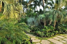 Drought tolerant container plants landscape tropical with palm trees stone pavers