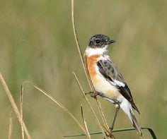Bird Sanctuaries in Jammu and Kashmir, India @ Sanctuariesindia.com