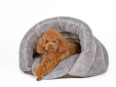 Amazon.com : PLS Pet Cuddle Pouch Pet Bed (Small), Bag, Covered Hooded Pet Bed, Cosy, For Burrower Cats and Puppies, Gray : Pet Supplies