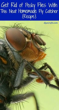 Flies and summer seem to go hand-in-hand. You just can't have one without the other. Although there are many different sprays on the market to get rid of flies, not everyone wants chemicals sprayed around their homes.