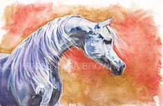 Tara Brown is one of Australia's aclaimed equine artists. Tara is also an actress, reporter for Australian equine based tv documentaries and a professional horse rider. Tara has sold her artworks world wide and her works are considered collectors items. Arabian Art, Arabian Horses, Horse Face, Limited Edition Prints, Equestrian, Original Artwork, Canvas Art, Paintings, The Originals