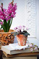 Hyazinthe & Usambaraveilchen in Blumentöpfen