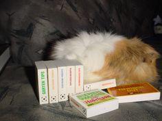 Genug der Bücher ... Willi sucht sich eine neue Beschäftigung.