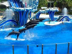 http://seaworldparks.com/seaworld-orlando/Attractions/Shows/Blue%20Horizons