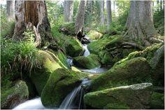 Dreisessel - Bayrischer Wald Germany Landscape, Hiking Routes, Wanderlust Travel, Bavaria, Nature Pictures, Weekend Getaways, Wonderful Places, Waterfalls, Beautiful Landscapes