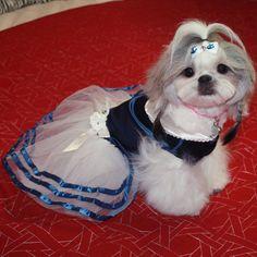 http://www.landog.com.br/celebridade/dicas-de-beleza-com-ellie-the-shih-tzu/