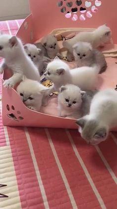 Super Cute Funny Kitten cat Videos Compilation | #funnycat #funnycatvideos #funnyanimals #Shorts Cute Baby Cats, Cute Little Animals, Cute Funny Animals, Cute Babies, Disney Fun Facts, Super Cat, Funny Cat Videos, Pretty Cats, Cat Gif