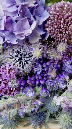 Purple Collection Bright.jpg 845×1,500 pixeles