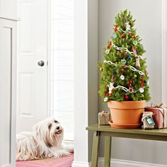 Lowe's Creative Ideas - I'm making a pet tree this year. For ornaments I'm using their rabies tags, Milkbone dog biscuits and chew toys. :)