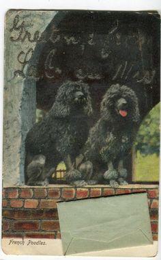Black French Poodles vintage postcard black by sharonfostervintage, $4.00