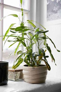 coiled snake planter