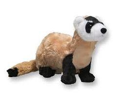 「UK animal ferret」の画像検索結果