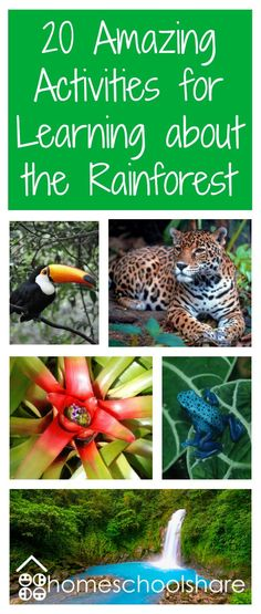 rainforest activities