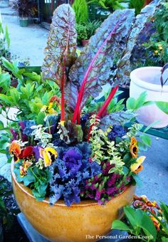 Fall Container Garden: Ornamental Edibles!  (Pinner: I love this, just want I was looking for.)
