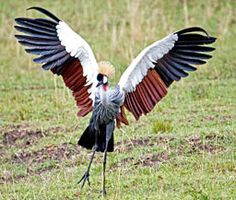 african birds - Google Search