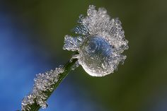 Frost #6 by Lord V, via Flickr