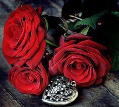 As pétalas de uma rosa.