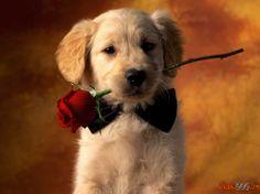 Fotos de perros mestizos
