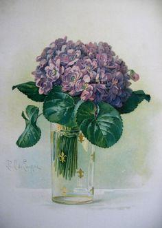 """Violets"" -  Paul de Longpre"