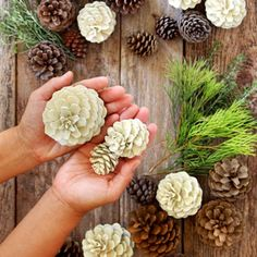 Easiest 5 Minute 'Bleached Pinecones' {without Bleach!} Make beautiful bleached pinecones in 5 minutes without bleach! Non-toxic & easy DIY craft, perfect for fall, winter, Thanksgiving & Christmas decorations! Christmas Planters, Christmas Mason Jars, Outdoor Christmas Decorations, Diy Christmas Gifts, Christmas Projects, Garden Decorations, Mason Jar Crafts, Mason Jar Diy, Winter Planter