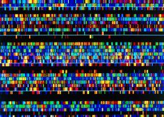 Computer screen display of a human DNA  sequence as a series of coloured bands. This is for the human genome project. DNA consists of 2 long strands linked by the interactions of bases along their lengths. Each colour represents a specific base. The sequence of bases makes up the genetic code in the form of genes, segments of DNA which have specific functions within an organism. By studying the genes in human DNA, a greater understanding of genetic diseases & heredity can be achieved.