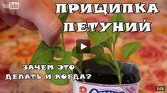 www.youtube.com/watch