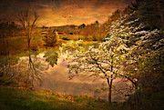Golden Pond by Kathy Jennings