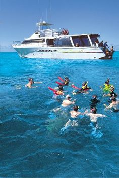 Snorkel trip to the Great Barrier Reef Wavelength Marine Charters from Port Douglas