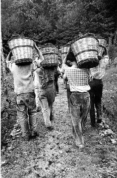 Enzo Sellerio: Etna, Vendemmia, Italy, people working with Basket basket Italian People, Italian Wine, Vintage Photographs, Vintage Photos, Italy Landscape, Old Photography, Vintage Italy, In Vino Veritas, Palermo