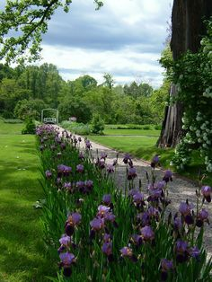 Perennial borders and iris at Montgomery Place in Annandale-on-Hudson, NY on the Hudson River